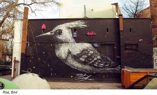 Roa, Bird