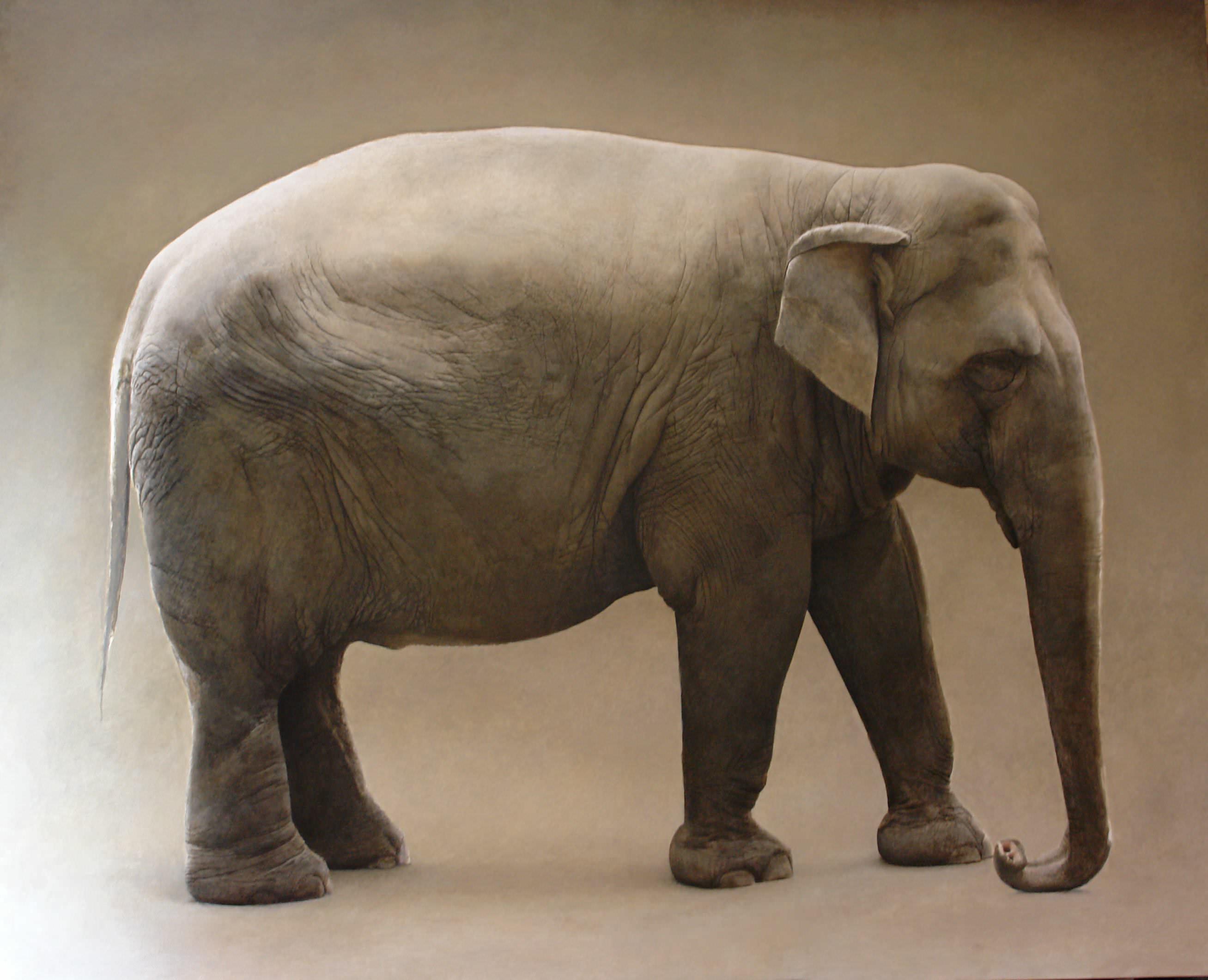 Marzio tamer elefante for Marzio tamer