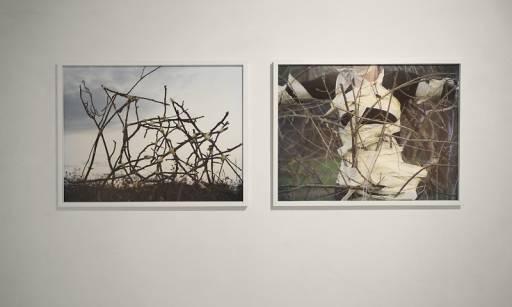fino al 26.IV.2009 |  Marche centro d'arte #3     | Cupra Marittima (ap), Franco Marconi
