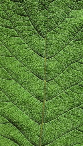 fino al 26.II.2012 | Botánica. After Humboldt | Roma, Accademia Reale di Spagna