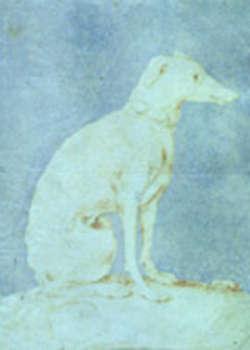 pinacoteca stuard, il levriero del parmigianino
