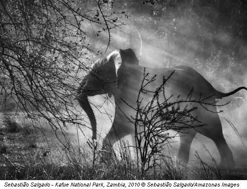 Sebastião Salgado - Kafue National Park, Zambia, 2010 © Sebastião Salgado/Amazonas Images