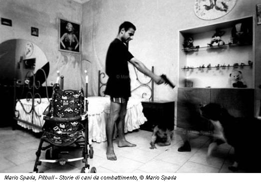 Mario Spada, Pitbull - Storie di cani da combattimento, © Mario Spada