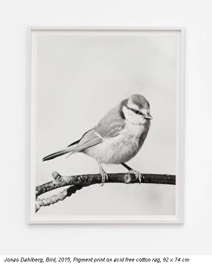 Jonas Dahlberg, Bird, 2015, Pigment print on acid free cotton rag, 92 x 74 cm