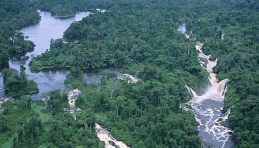 Sotheby's salva le foreste