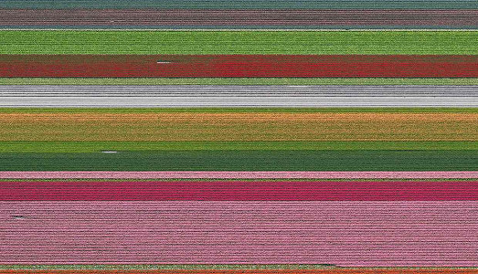 Mondrian, i tulipani | e i danni ambientali