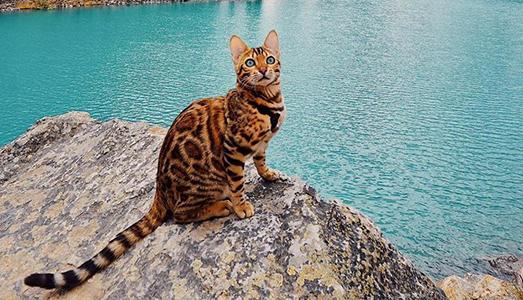 I migliori account dei gattini su Instagram