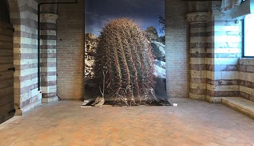 Fino al 24.VII.2017 | Percezione Donna | Logge Dei Lanari, Perugia