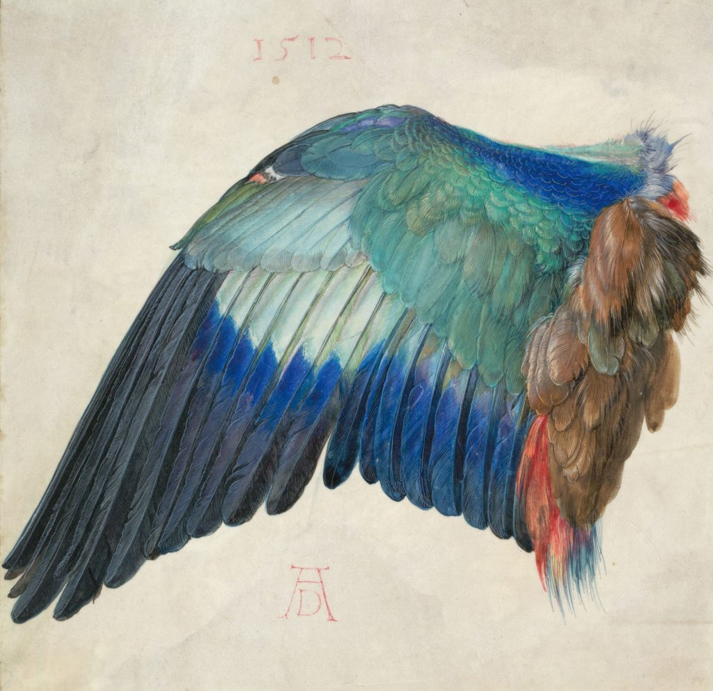 "Albrecht Durer, ""Left Wing of a Blue Roller"", c. 1500. © The Albertina Museum, Vienna"
