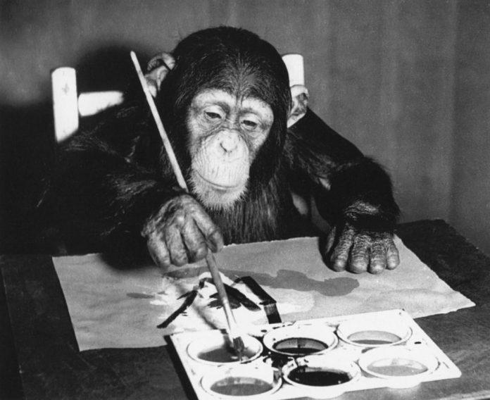 Congo, lo scimpanzè pittore