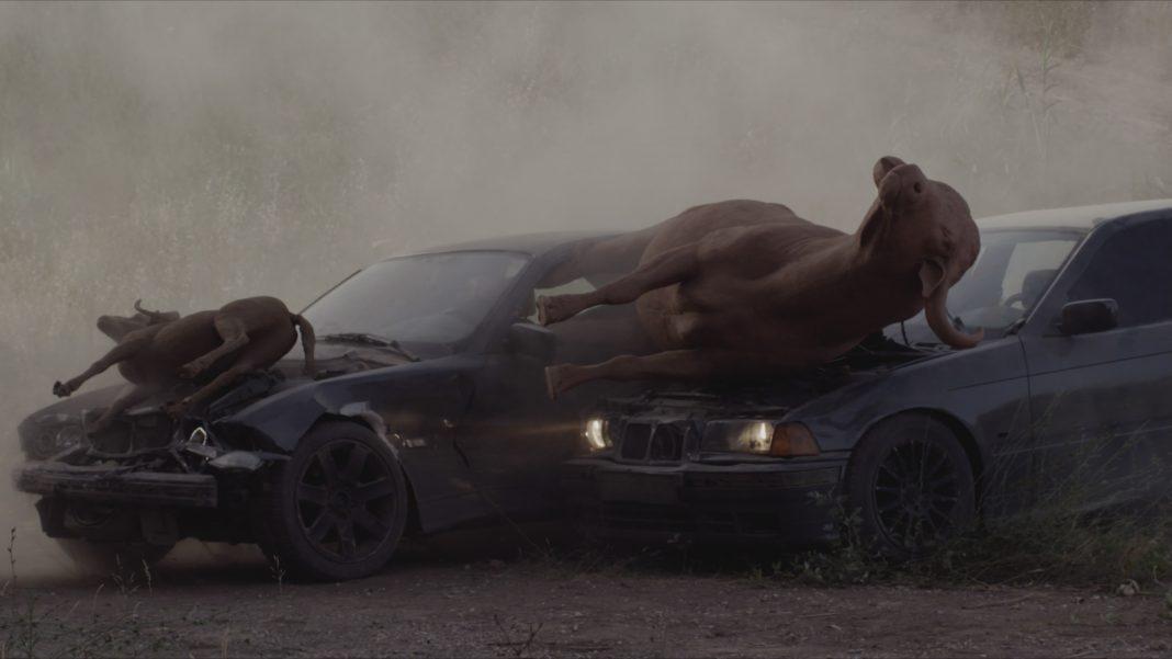 Horse Power (courtesy Nico Vascellari)