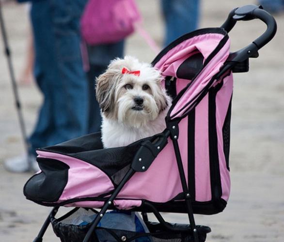 cane nel passeggino