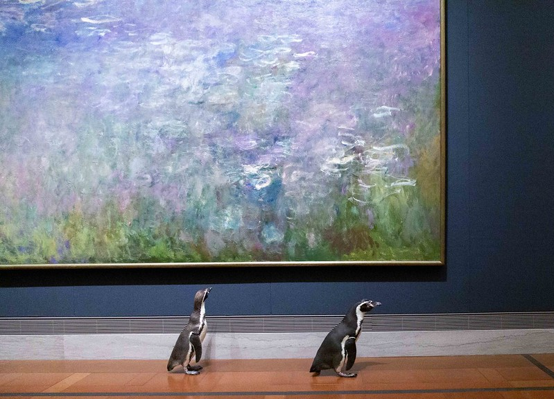 pinguini museo