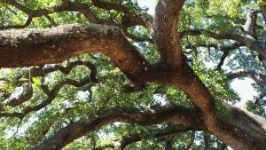 Flatform, History of a tree
