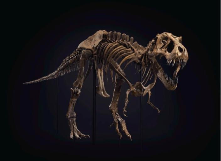 Lo scheletro del T-Rex venduto all'Evening Sale di Christie's del prossimo 6 ottobre