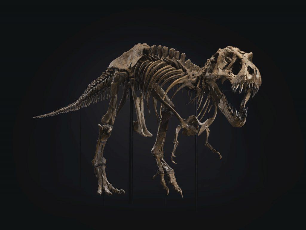 Stan, lo scheletro di T-Rex venduto da Christie's