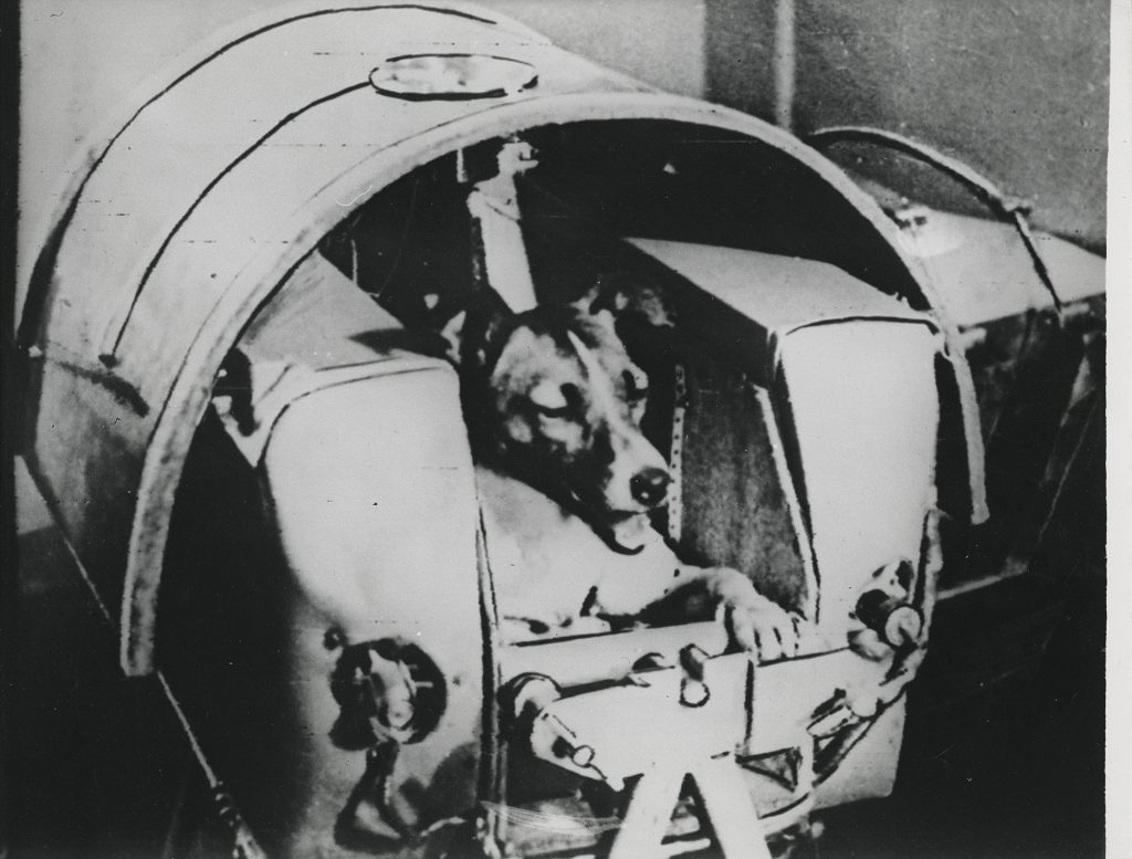 The dog Laika, first animal to orbit the Earth, before launch, November 3, 1957. Stima: GBP 1,000 - GBP 1,500. Christie's, Voyage to Another World