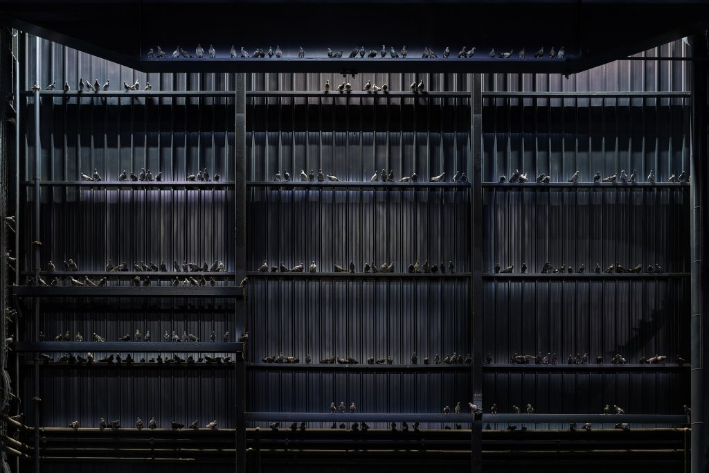 Maurizio Cattelan Ghosts, 2021 Veduta dell'installazione, Pirelli HangarBicocca, Milano, 2021 Piccioni in tassidermia Dimensioni ambientali Courtesy l'artista e Pirelli HangarBicocca, Milano Foto: Agostino Osio
