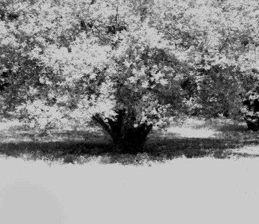 Erminia De Luca – Cantici