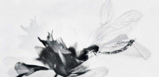 Silvia Reichenbach / Stefania Ricci – Self Reflex