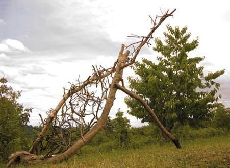Artemisia 2007