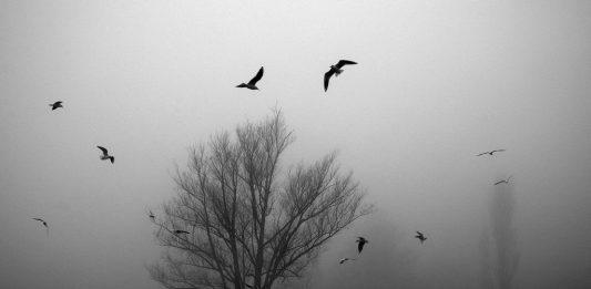 Bruno Taddei – Dentro la nebbia
