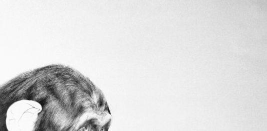 Corina Cohal – L'infanzia di Darwin