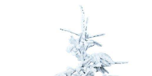 Fabrizio Modesti – Oggi è il primo giorno d'inverno