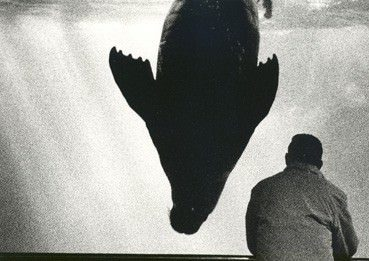 Giuseppe Ripa – Aquarium