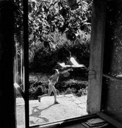 Willy Ronis / Colleziona 2010