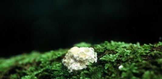 Green Platform. Arte Ecologia Sostenibilità