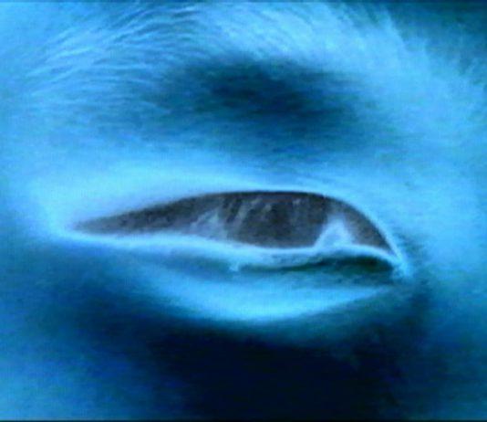 Robert Cahen – L'entrapercu. Video d'arte 1976 – 2003