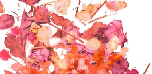 7 Artisti per 7 Rose