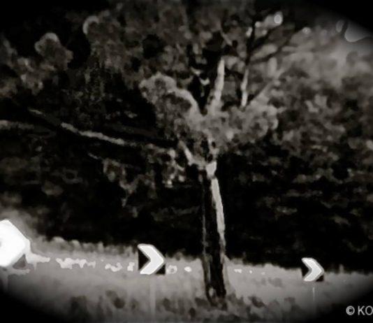 One Minute Tree