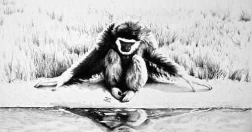 Andrea Marescalchi – La scimmia l'immagine il suo doppio