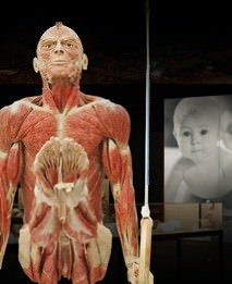 Gunther von Hagens – Body worlds