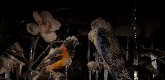 Gallery A: Mat Collishaw – The Crystal Gaze / Gallery B: We Have a business proposal of Twenty Two Million, Five Hundred Thousand United State Dollars only