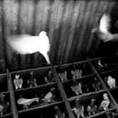 Stefano Sbrulli – Volare alto in una gabbia stretta