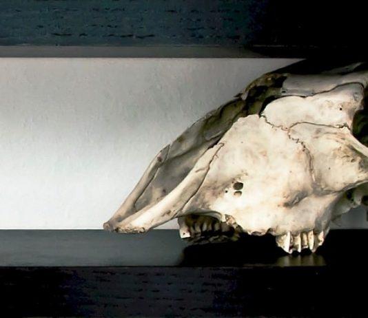 Sapere Aude Circuito Off 55ma Biennale d'arte di Venezia