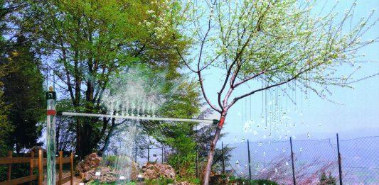 L'alchimia dell'albero. La natura verde dell'arte.