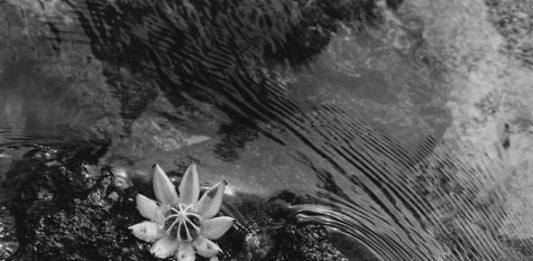Walter Chappell – Eternal Impermanence