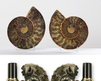 Fossili e Pietre. Forme e Colori. Dal collezionismo alla gioielleria