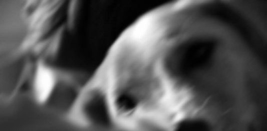 Tiziana Pers – Altri sguardi. Tiziana Pers per Animot
