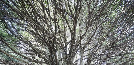 Sandro Scalia – naturalia /artificialia