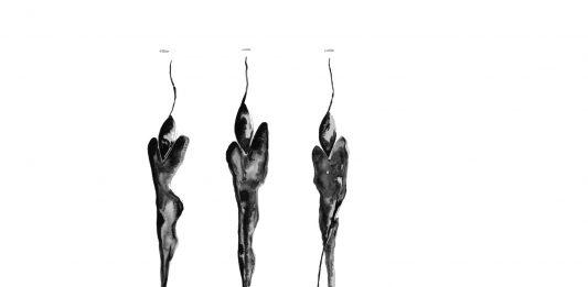 Alessandro Beluardo – Dove l'acqua s'inchina