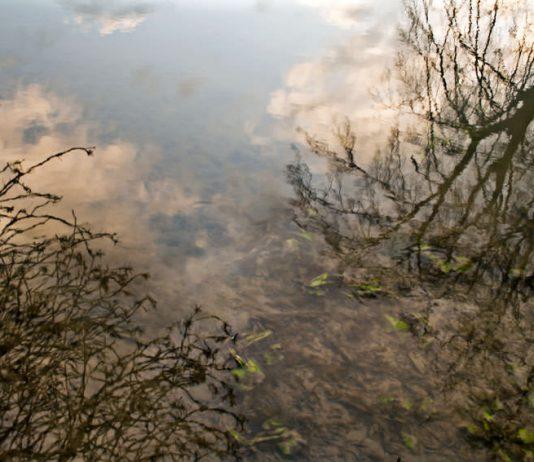 Pina Inferrera – Dalla luce nell'acqua