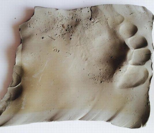 Virginia Zanetti  – Poggiare i piedi dentro l'anima/Studio quarto per l'estasi   nel paesaggio