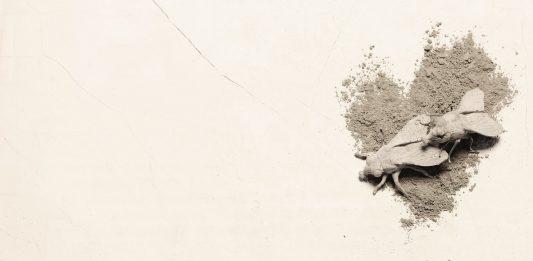 Francesco Petrone – Cemento armato