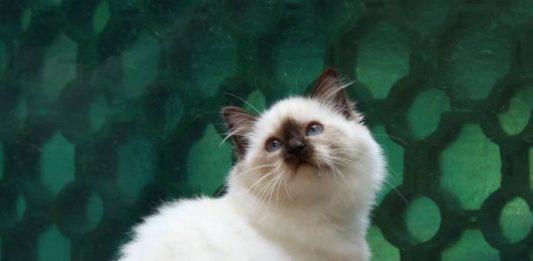 Katten Kabinet