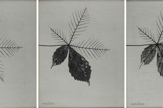 Conceptual Photography. Fotografia concettuale e internazionale anni '60/'70